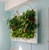 植物艺术壁画